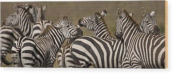 A Herd Of Zebra Stand In A Plain Wood Print by Ralph Lee Hopkins