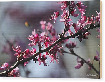 Wood Print featuring the photograph A Hint Of Spring  by Amy Gallagher