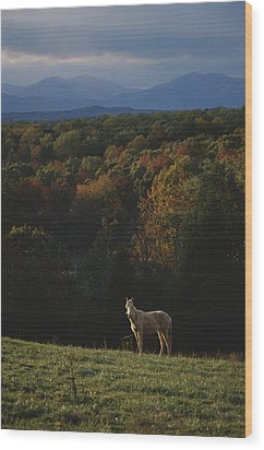 A Horse Stands On A Hill Overlooking Wood Print by Sam Kittner