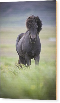 A Horse With Its Mane Blowing In The Wood Print by David DuChemin