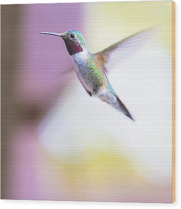 A Humming Bird In The Rocky Mountains Wood Print by Ellie Teramoto