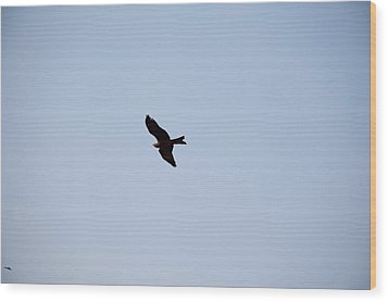 A Kite Flying High In The Sky Wood Print by Ashish Agarwal