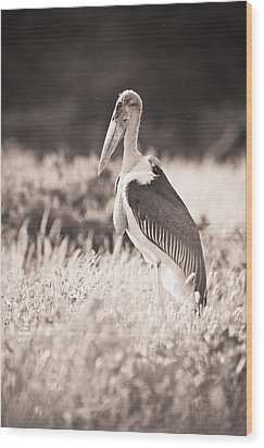 A Large Bird Stands In The Grass Wood Print by David DuChemin