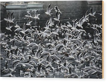 A Large Group Of Black-headed Gulls Wood Print by Tim Laman