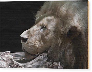 A Lions Portrait Wood Print by Ralf Kaiser