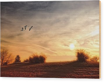 A Little Peace Wood Print by Tom York Images