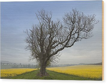 A Lone Tree On The Edge Of A Yellow Wood Print by John Short