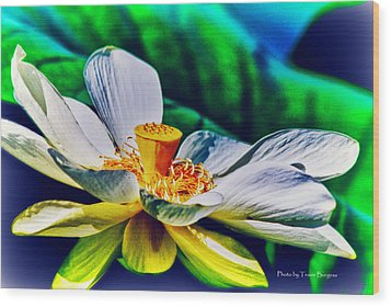 Wood Print featuring the photograph A Lotus Brightly by Travis Burgess