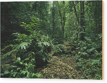 A Lush Woodland View In Papua New Wood Print by Klaus Nigge