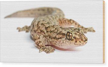 A Marble Gecko Sits In Studio Striking Wood Print by Brooke Whatnall
