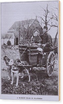 A Market Team In Flanders. Two Dogs Wood Print by Everett