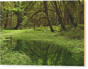 A Meadow Inside The Quinault Valley Wood Print by Darlyne A. Murawski