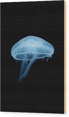 A Moon Jellyfish (aurelia Aurita) Berlin, Germany Wood Print by Andreas Schlegel