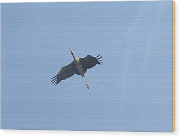 A Painted Stork Flying High In The Sky Wood Print by Ashish Agarwal