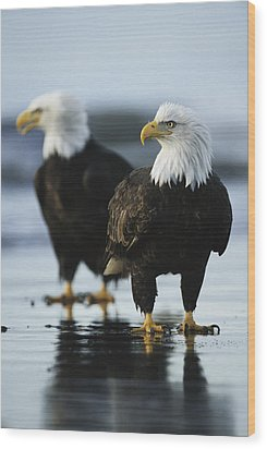 A Pair Of American Bald Eagles Stand Wood Print by Klaus Nigge