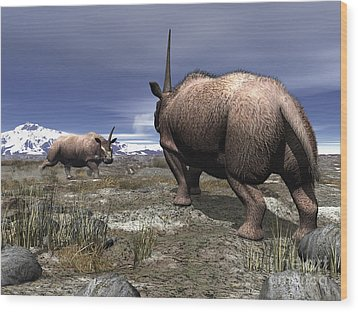A Pair Of Male Elasmotherium Confront Wood Print by Walter Myers