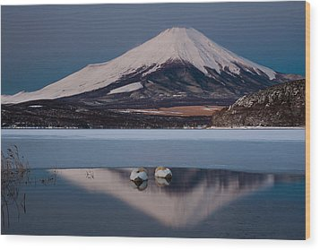 A Pair Of Mute Swans In Lake Kawaguchi In The Reflection Of Mt Fuji, Japan Wood Print by Mint Images/ Art Wolfe