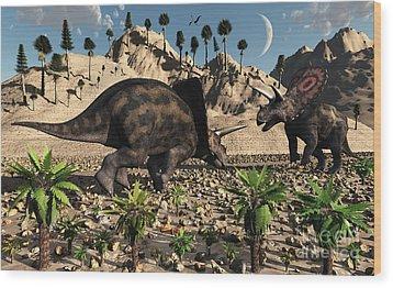 A Pair Of Torosaurus Dinosaurs Fight Wood Print by Mark Stevenson