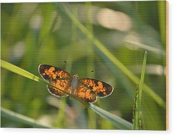 Wood Print featuring the photograph A Pearl In The Grass by JD Grimes