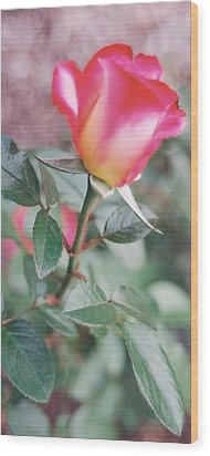Wood Print featuring the photograph A Perfect Rose by Lynnette Johns