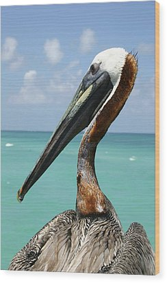 A Personable Pelican Portrait Wood Print by Stephen St. John