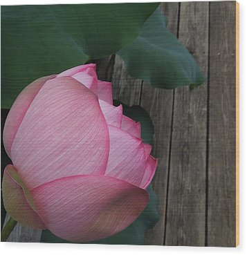 A Pink Lotus Flower Wood Print by Chad and Stacey Hall