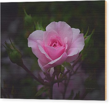 A Pink Rose Wood Print by Xueling Zou