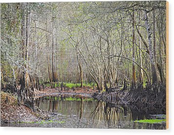 A Quiet Back Woods Place Wood Print by Carolyn Marshall