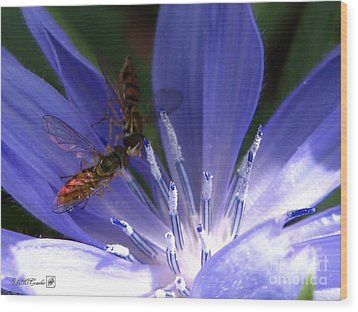 Wood Print featuring the photograph A Quiet Moment On The Chicory by J McCombie