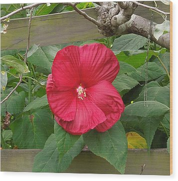 A Red Hibiscus Wood Print by Chad and Stacey Hall