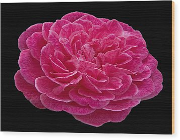 A Red Rose For You Wood Print by Dennis Dugan