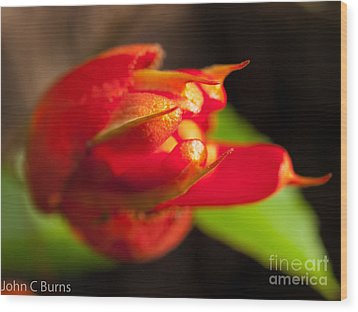 Wood Print featuring the photograph A Rose By Another Name by John Burns