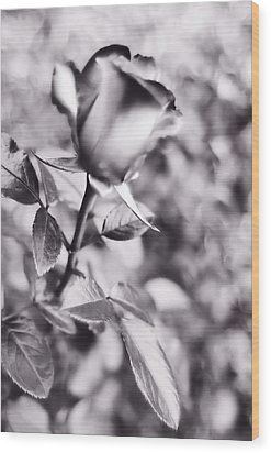 Wood Print featuring the photograph A Rose By Any Other Name by Lynnette Johns