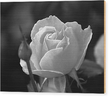 Wood Print featuring the photograph A Rose In Black And White by Janice Adomeit