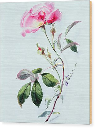 A Rose Wood Print by James Holland
