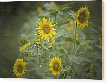 A Row Of Bright Yellow Sunflowers Grow Wood Print by Hannele Lahti