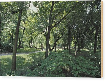 A Scenic And Shady Central Park Garden Wood Print by Jason Edwards