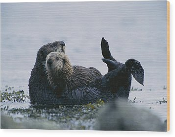 A Sea Otter Cradling Her Pup In A Kelp Wood Print by Joel Sartore