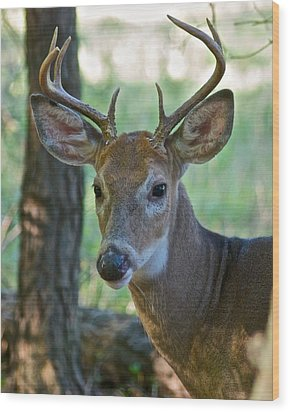 A Seven Point Profile 9752 Wood Print by Michael Peychich