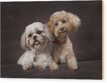 A Shihtzu And A Poodle On A Brown Wood Print by Corey Hochachka