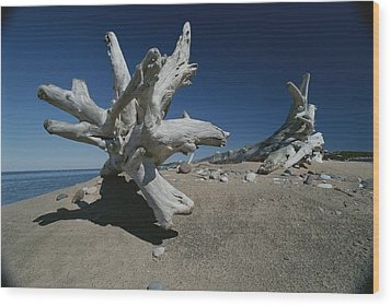 A Shot Of Some Driftwood On A Beach Wood Print by Raymond Gehman