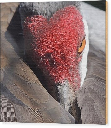 A Shy Sandhill Crane Wood Print by Travel Designed