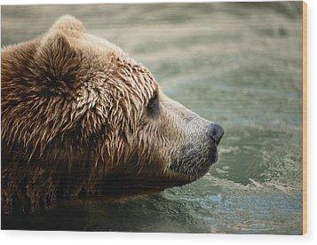 A Side-view Of A Captive Kodiak Bear Wood Print by Tim Laman
