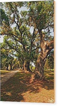 A Southern Stroll Wood Print by Steve Harrington