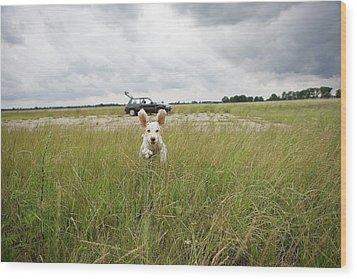 A Spanish Waterdog Running Through A Field Wood Print by Julia Christe