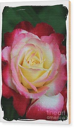 A Special Rose Wood Print by Lori Mellen-Pagliaro