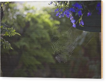 A Spider Web In A Garden Wood Print by Taylor S. Kennedy