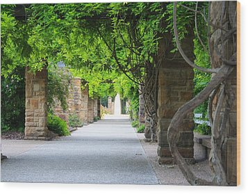 Wood Print featuring the photograph A Stroll Under The Vines by Lynnette Johns