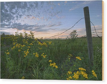 A Summer Evening Sky With Yellow Tansy Wood Print by Dan Jurak
