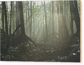 A Tangle Of Buttressed Roots In A Misty Wood Print by Tim Laman